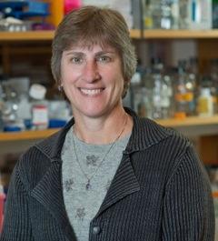 Marisa Bartolomei – Ph.D.