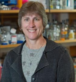 Marisa S. Bartolomei, Ph.D.*